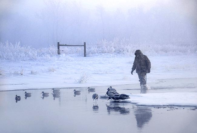 Great Salt Lake Ducks